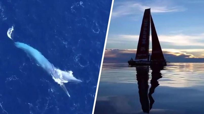 Les images exceptionnelles de drones pendant la Volvo Ocean Race