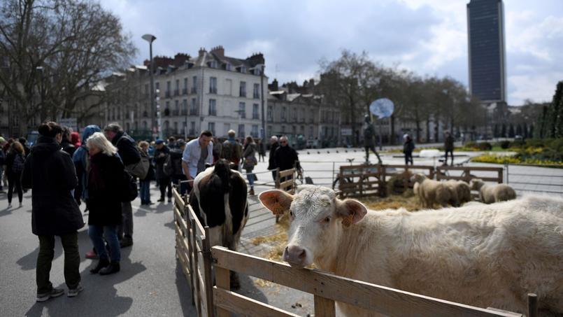 Notre-Dame-des-Landes : crispations autour de l'avenir des terres