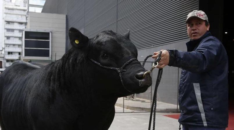 Un taureau argentin baptisé