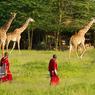 En Tanzanie, la vie des massaïs s'exprime à travers une progression de rites sur trois étapes spécifiques : l'enfance, la vie d'initiés et l'accession au statut d'ancien.