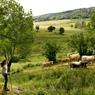 La vache d'Aubrac a bien failli disparaître dans les années 1970. Aujourd'hui grâce à des paysans visionnaires, elle est devenue l'ambassadrice du plateau.