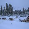 Le musher peine à contenir les chiens, trop heureux de se lancer dans la course à travers la forêt givrée du Parc National des Grands Jardins.