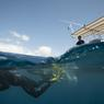 Le «whale watching» est un excellent moyen de médiatiser la cause animale mais n'est pas sans aléas… Pour éviter que les baleines soient harcelées par des visiteurs parfois trop enthousiastes, un code de bonne conduite a été instauré depuis 2002 en Polynésie.