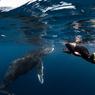 Les nageurs ne peuvent s'approcher à moins de 30 mètres. Ils doivent rester calmes, groupés et ne pas tenter de poursuivre l'animal. A ces conditions, l'observation peut réserver d'heureuses surprises : l'animal, confiant, pourra choisir de s'approcher...