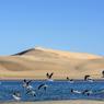 La mer, les dunes et la faune de la plage de Barra de Valizas offrent un spectacle de toute beauté.