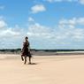 La longue langue de sable de la plage de la Brava, près de Jose Ignacio, fait le bonheur des cavaliers.