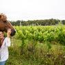 Indispensable compagnon du gaucho et du joueur de polo, le criollo uruguayen ou argentin fait partie intégrante du décor.