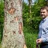 «En apparence, les arbres autour de moi sont morts mais en réalité ils vivent plus que lorsqu'ils étaient vivants parce que désormais ils abritent une centaine d'espèces d'insectes. Un arbre mort c'est une grande richesse biologique», souligne le professeur Rafal Kowalczyk, directeur d'une antenne de l'Académie polonaise des sciences à Bialowieza.