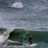 BAIGNADE NON SURVEILLÉE. Concentré sur sa planche, le surfeur Daniel Caban n'a sans doute pas vu le grand requin blanc qui patrouillait à quelques mètres seulement de lui, juste à la limite des hautes eaux, près de la plage de Swansea Heads, en Nouvelle-Galles-du-Sud, le plus peuplé des Etats australiens, au sud-est du pays. Même s'ils ne s'approchent que très rarement des hommes, les requins ont été responsables de la mort de deux personnes en moins d'une semaine en Australie : un surfeur et une baigneuse. D'après les spécialistes, leurs attaques sont en augmentation à cause de la popularité croissante des sports nautiques. Victimes de la surpêche et de leur mauvaise réputation, la plupart des espèces de requins sont menacées de disparition.