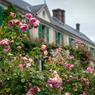 En dépit de la pluie, dont ils ont souffert cette année, les massifs de rosiers affichent une opulente splendeur.