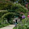 L'allée principale fin juin. Pavots, ails d'ornements, phlox et autres vivaces ou bisannuelles occupent le devant de la scène tandis que les grandes arches semblent ployer sous des guirlandes de roses.