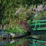 Le jardin d'eau et le petit pont japonais au printemps encadré par l'abondante et subtile floraison des glycines.