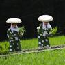CÉLÉBRATION. Nagoya était en fête ce dimanche 26 juin. Chaque année, la troisième ville du Japon organise une cérémonie autour de la plantation du riz. Au cours de cette célébration, des saotome, jeunes planteuses que l'on peut voir ici, défilent et dansent devant les prêtres Shinto et les membres des JA (coopératives agricoles japonaises).