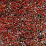 TOUT DE ROUGE. Les participants aux fêtes de San Fermin, à Pampelune en Espagne, lèvent le traditionnel foulard rouge. Le festival va durer neuf jours, durant lesquels trois millions d'espagnols vêtus de blanc et de rouge vont peupler la capitale de la Navarre, qui abritera processions, fêtes nocturnes, lâchers de taureaux et corrida.