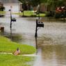 SOUS LES EAUX. La Louisiane fait de nouveau face à des inondations depuis ce week end, où les fortes pluies, plus de 50 cm en deux jours, ont provoqué des inondations destructrices, comme ici à Youngsville. 30.000 habitants ont été évacués, sept personnes sont décédées, et plus de 1700 militaires sont déployés. L'état de catastrophe naturelle a été prononcé par le président Barack Obama.