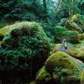 Un des nombreux «visages artistiques» de la France : un bois aux allures de «vallée des fées».
