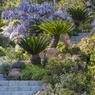 Rochers, herbes aromatiques, cycas et glycine semblent envahir cet escalier avec leur exhubérance chaleureuse. Photo issue du beau livre de Dane McDowell, Jardins Méditerranéens contemporains, Ulmer, 2016.