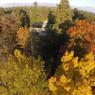 Le mois d'octobre est celui des couleurs à l'Arboretum national des Barres: érables, ginkgos, arbre à perruques… : une palette de couleurs digne des plus grands peintres et qui participe à la renommée du lieu.