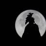 Le 14 novembre. La silhouette de la statue de la Liberté surmontant le dôme du Capitole se découpe devant la Super Lune.