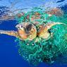 PIÉGÉE PAR LA BÊTISE HUMAINE. Nul besoin d'un reportage complet; un seul cliché a suffi au photographe espagnol Francis Pérez, spécialisé dans la photo sous-marine, pour emporter le premier prix de la catégorie « Nature » du 60e World Press. Mais ce cliché dit tout. Pris au large de Tenerife, sur l'une des côtes des îles Canaries, il illustre mieux qu'un long rapport d'experts l'effrayant problème des déchets qui s'agglutinent dans nos océans en piégeant, en empoisonnant ou en asphyxiant des millions d'animaux marins. Ici, la victime est une tortue caouanne, une espèce menacée qui n'a pourtant qu'un seul véritable prédateur : les vieux filets de pêche abandonnés dans l'eau. CQFD.