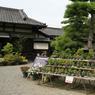 Dans le parc Tamamo, qui entoure les vestiges du château de Takamatsu, un fleuriste vend des bonsaïs. Cet art est toujours entretenu par les Japonais.