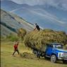 Dans la région de Khévi, au rythme de gestes ancestraux, les paysans préparent l'hiver en stockant de grandes quantités de foin.