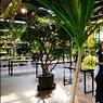 Le café Botanica, imaginé par la Taïwanaise Gao Yijing vaut autant pour sa déco florale tropicale que pour ses thés, ses jus de fruits, ses bières artisanales ou sa cuisine bio.