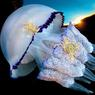 PASSAGERS CLANDESTINS.Entre deux eaux, cette méduse (Rhizostoma pulmo) dérive lentement dans la baie de Naples au gré des courants qui agitent la mer Tyrrhénienne, en Italie. Comme un zeppelin marin, cette créature à l'élégance troublante assure aujourd'hui le transport de deux voyageurs imprévus : des crabes de la famille des étrilles (Liocarcinus vernalis). Lorsque les méduses frôlent les fonds marins sablonneux, ces crustacés, qui ont sans cesse la bougeotte, saisissent l'occasion pour attraper leurs tentacules et se faire ainsi transporter de place en place sans effort. Cette interaction entre deux espèces s'appelle la phorésie. Une association naturelle et bienvenue qui existe chez les vertébrés, comme chez les invertébrés.