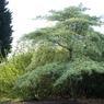 Le «prix de l'arbre» a été décerné à la municipalité des Mureaux (Yvelines) pour sa politique de plantation dynamique. Cette commune francilienne, densément peuplée, compte maintenant un arbre par logement.