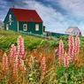 Sur l'île aux Marins au large de Saint-Pierre-et-Miquelon, le temps semble s'être arrêté. Ancienne terre de marins-pêcheurs et presque abandonnée, l'île a retrouvé ses couleurs depuis quelques années.
