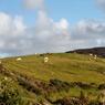 Le Donegal, le comté le plus sauvage et le moins peuplé d'Irlande. Ici, la péninsule de Fanad Head balayée par les vents déploie des nuances de vert, du plus sombre au plus clair.
