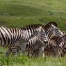 Le Royal Natal National Park du Drakensberg abrite une faune variée et nombreuse, comme ici, avec la présence de ces zèbres peu farouches.