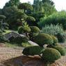 Ce spécimen centenaire d'if japonais ( Taxus cuspidata), formé en plateaux par un maître nippon, trône à l'entrée de la pépinière.