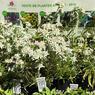 Pas besoin de cueillir les petites fleurs! Les amateurs d'edelweiss peuvent repartir avec une belle plante en godet achetée à l'accueil du jardin botanique.