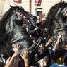 CHEVAL ROI. Comme tous les ans, la traditionnelle parade équestre des fêtes de la Saint-Jean a été organisée dans la ville espagnole de Ciutadella, à Minorque, aux Baléares. Ici en image, le cavalier et son cheval, cabré au milieu d'une marée humaine, fendent la foule compacte qui n'a qu'un seul objectif : toucher l'animal pour un moment de connivence magique.