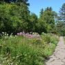 L'allée fleurie qui mène au sous-bois de la propriété, recouverte d'un dallage de granit.