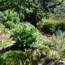 Clairière ensoleillée plantée d'arbustes, notamment d'érables et d'iris, au premier plan.