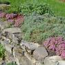 À l'origine, les deux hectares de terrain de la propriété n'étaient que roches et pierrailles dont Elsie Reford se servit pour créer de jolies rocailles fleuries.