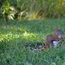 Le parc est peuplé de petits écureuils d'Amérique, peu farouches et très différents de notre écureuil d'Europe. Plus d'infos
