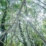 «Arcane»: inspirée du livre «La vie secrète des arbres», du forestier allemand Peter Wohlleben qui connaît un très grand succès de librairie, cette sculpture de la plasticienne Yushin U Chang, illumine de sa blancheur la pénombre de ce sous-bois de l'île aux Fagots.