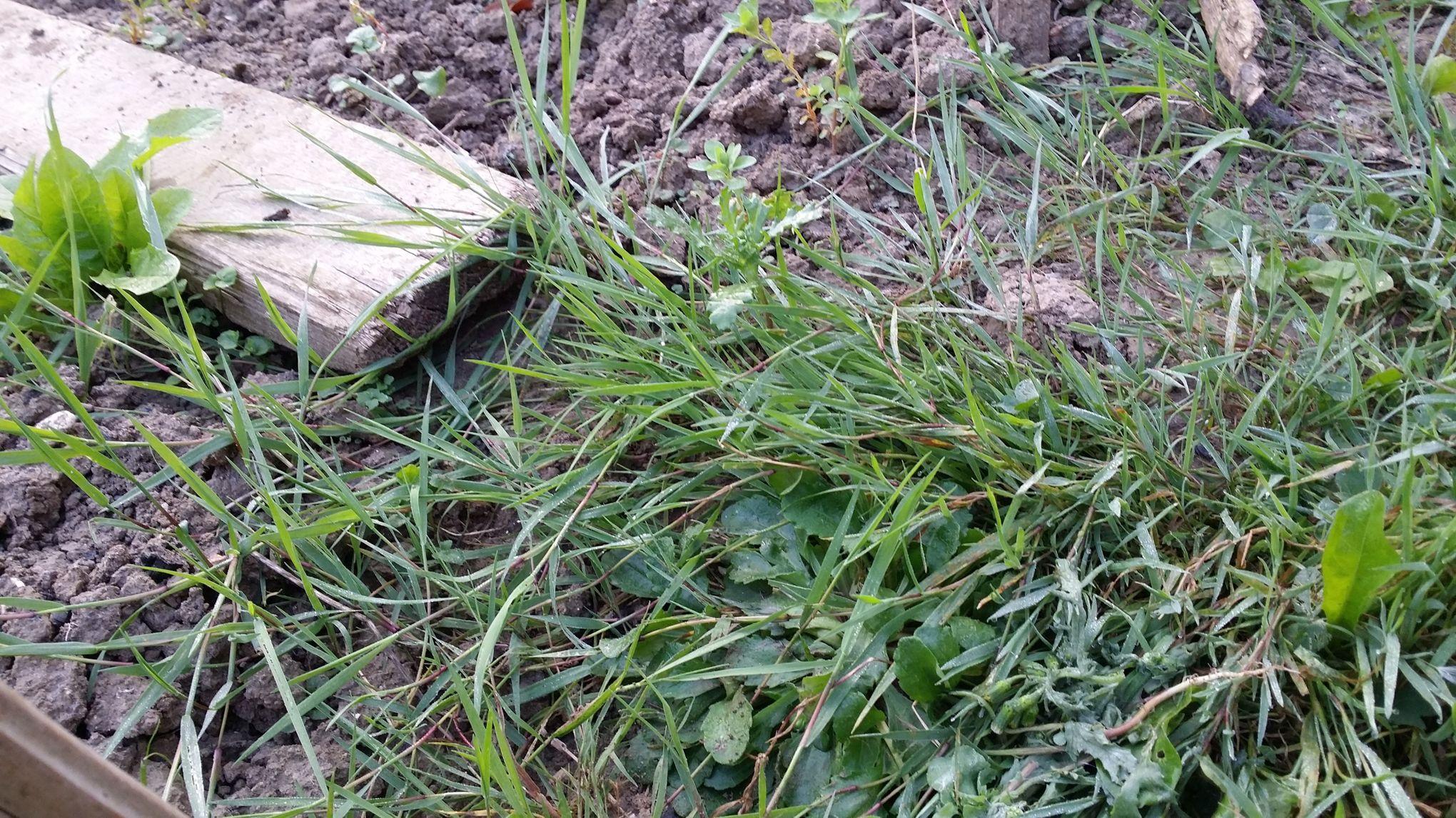 comment liminer les mauvaises herbes
