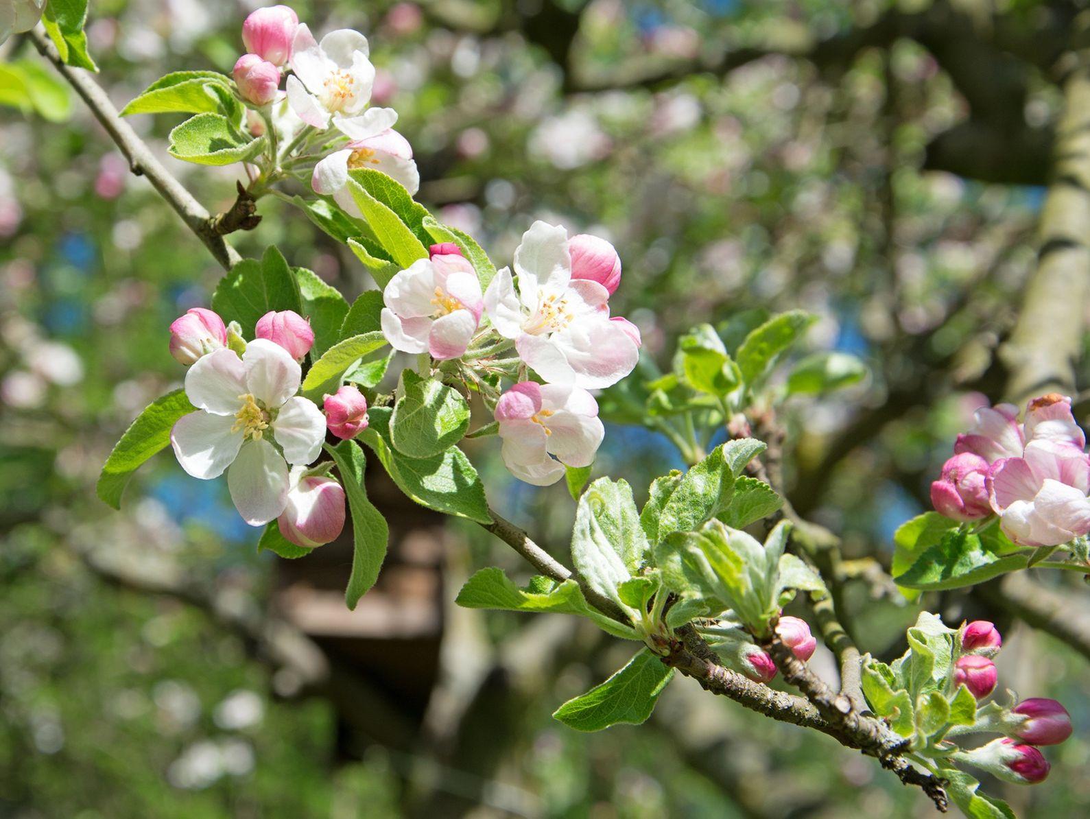 les fleurs d 39 un arbre donnent elles toujours des fruits. Black Bedroom Furniture Sets. Home Design Ideas