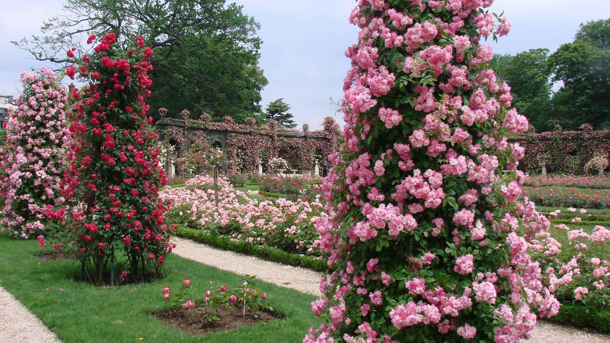 La d couverte des plus belles roseraies d 39 europe for Jardin de france magnanville 78