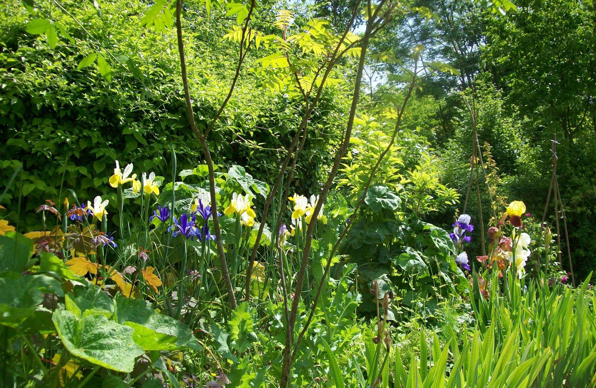 Yvelines de grands jardiniers vous ouvrent leurs portes for Jardin yvelines