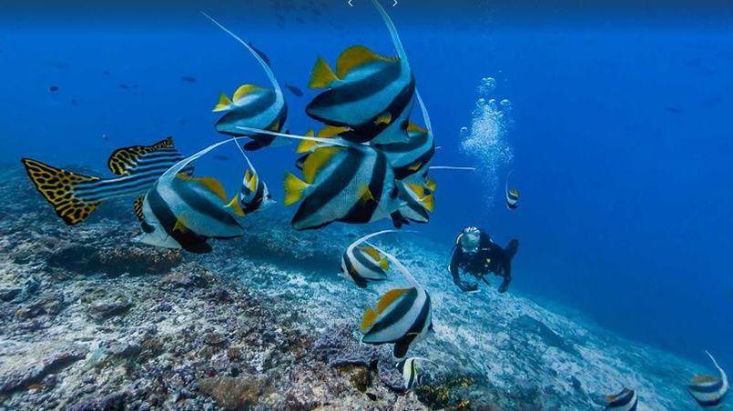 Google s 39 invite dans les fonds marins for Les fonds des photos