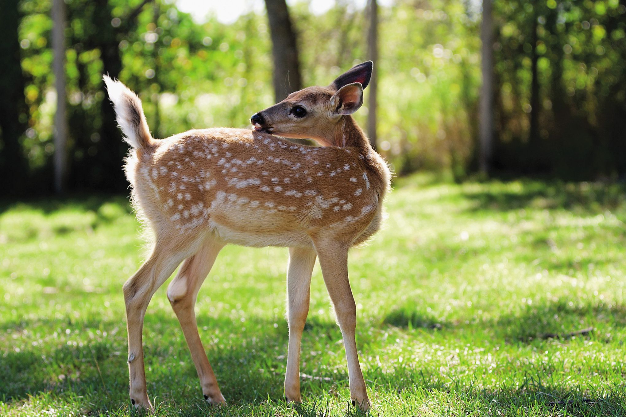 Le Domaine du Bois aux daims, au c u0153ur de la nature pour c u00f4toyer les animaux # Le Domaine Du Bois Aux Daims