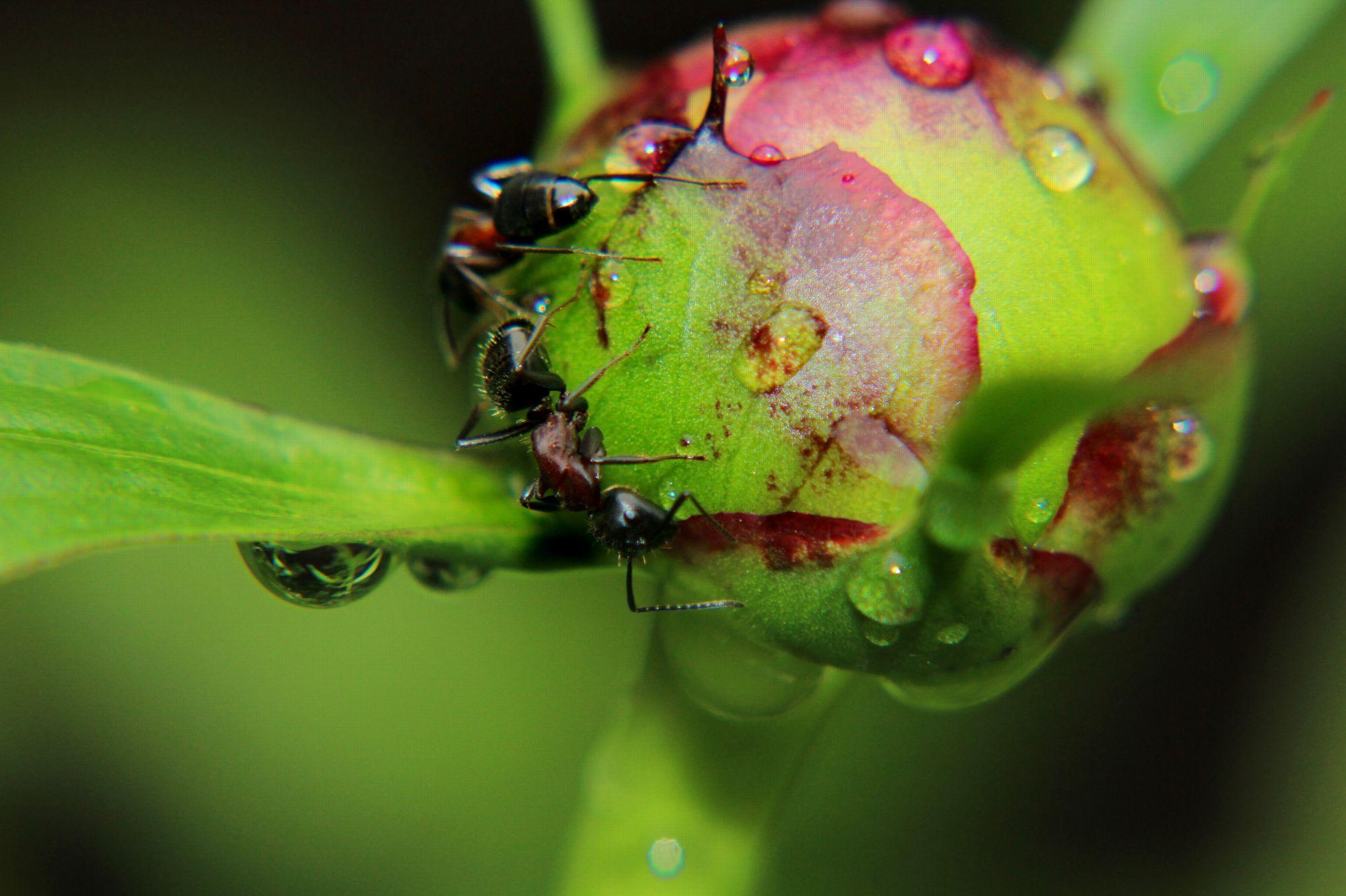 Les fourmis sont elles nuisibles dans un jardin - Fourmis dans le jardin ...