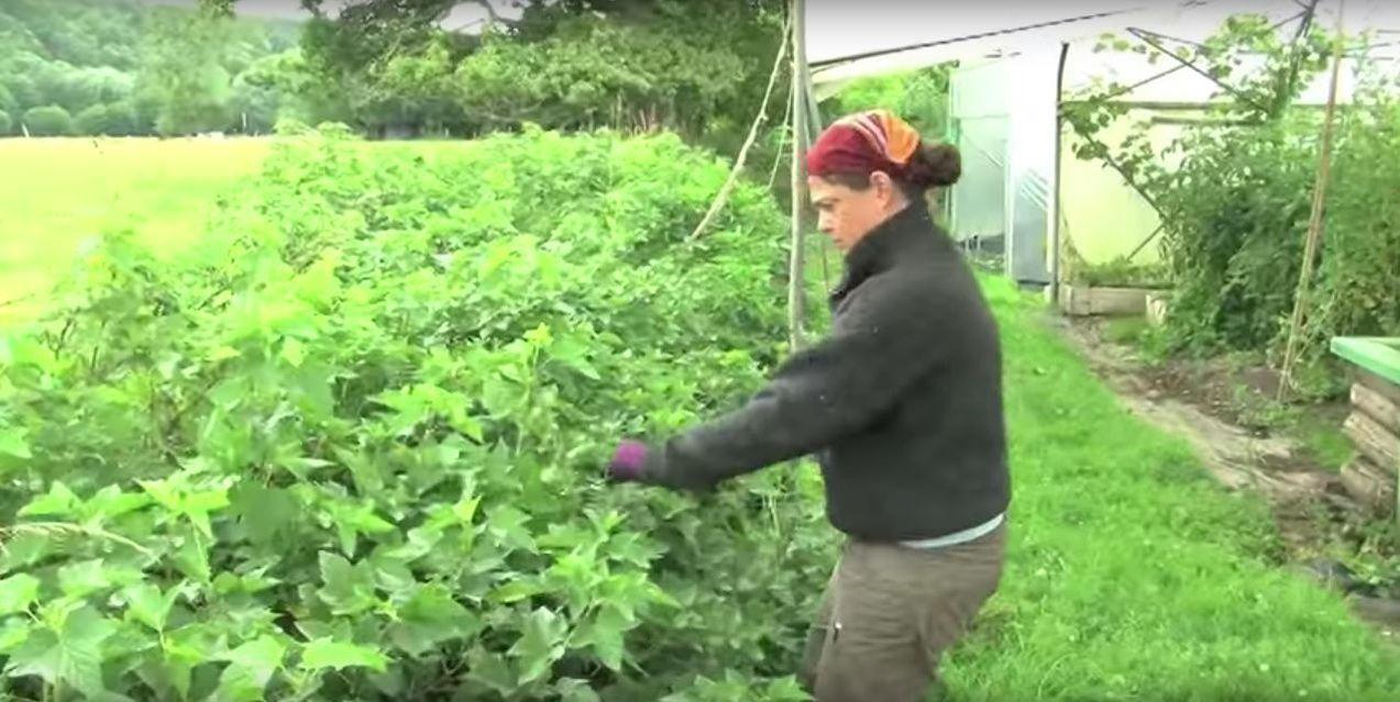 la ferme du bec hellouin permaculture rime avec rendement ForRendement Permaculture