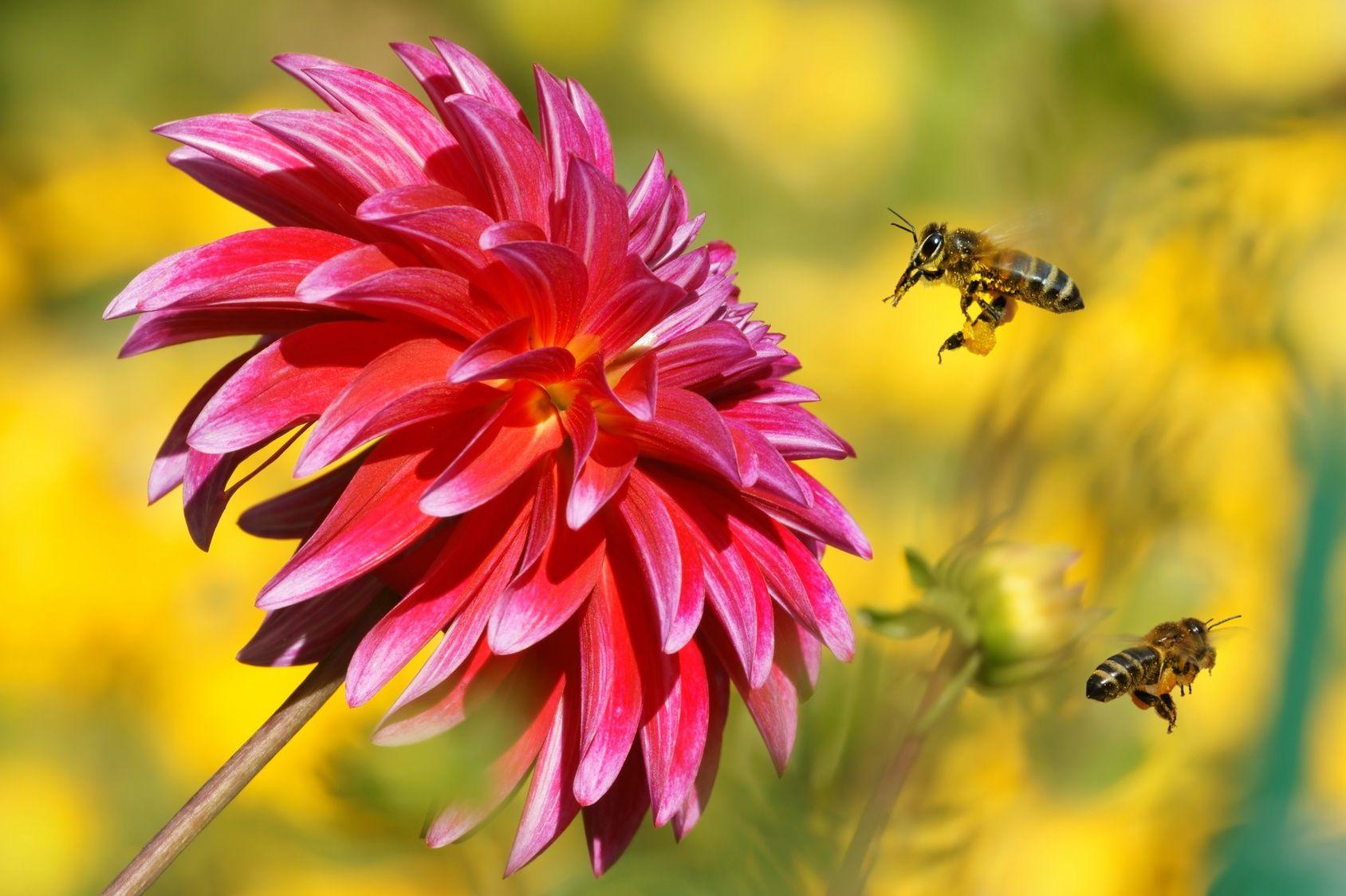 Comment attirer les abeilles abeille abeille comment - Comment attirer les oiseaux dans son jardin ...