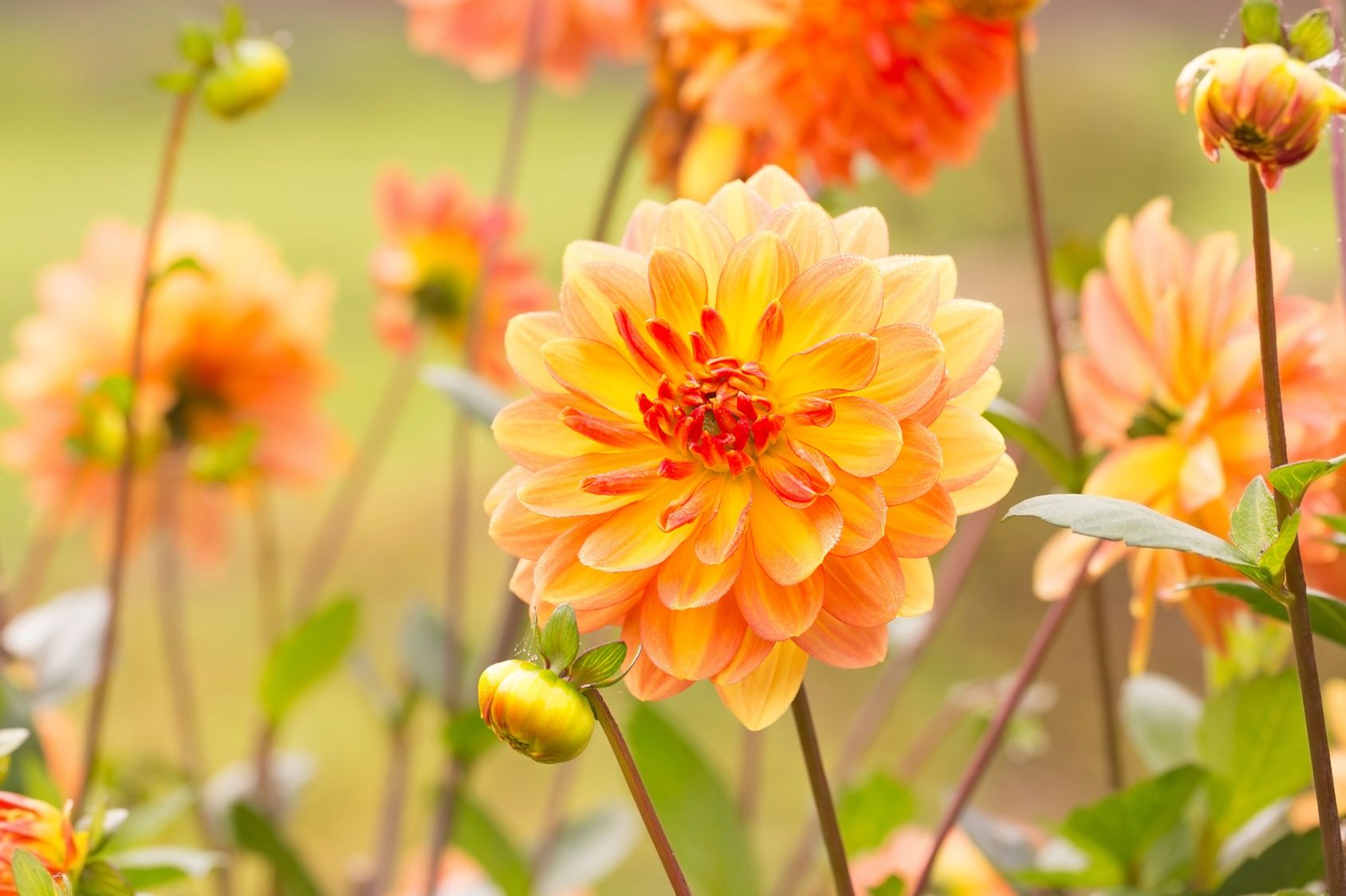 Plantez des fleurs et des l gumes pour l 39 automne for Fleurs automne